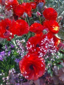 Ville ønske at jeg havde blomster i evig eje og altid ville være omgivet af dem i alle arter. Indtil videre må jeg nøjes med at opsøge Tivoli's blomsterkummer og andre steder med blomster, parker, ved træer og buske.